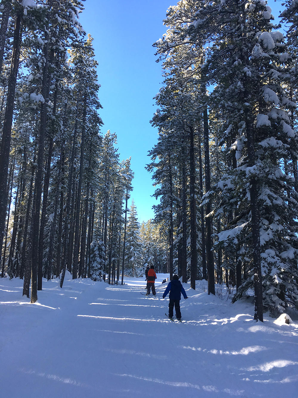 Beautiful view while crosscountry skiing with UCalgary Active Living